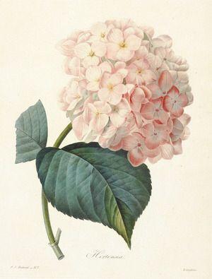 http://livedoor.blogimg.jp/iris_garden_blog/imgs/6/6/661f4740-s.jpgからの画像