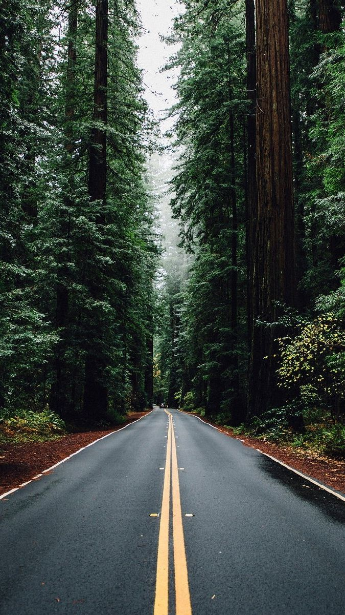 Green Big Trees Road Usa Iphone Wallpaper Wallpaper Wallpapers