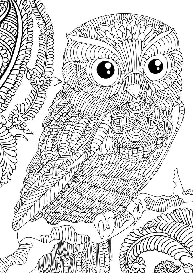 Owl FREE OWL ADULT COLORING BOOK