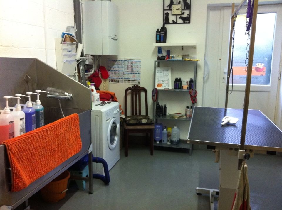 My Garage Has Been Converted Into My Grooming Salon Dog Grooming Salons Grooming Salon Grooming Shop