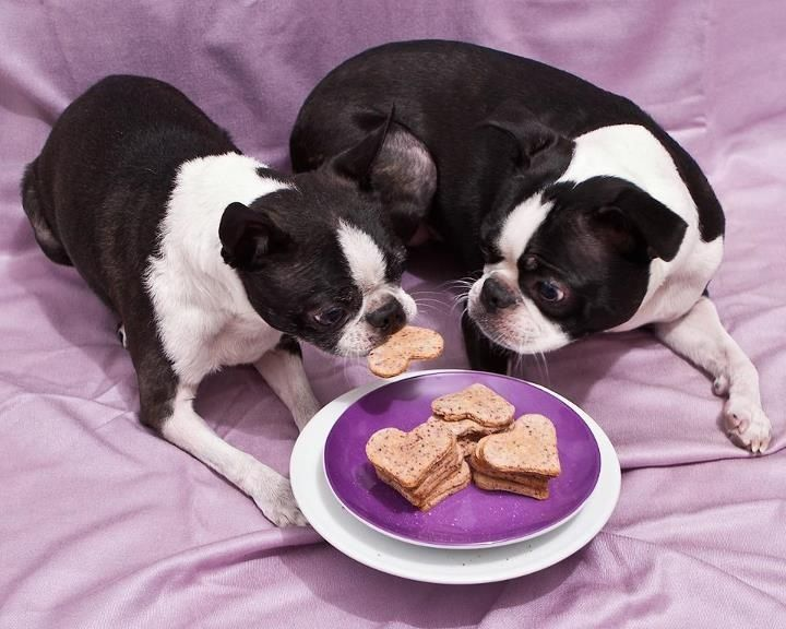 You Took An Extra One Dogs Pets Bostonterriers Facebook Com
