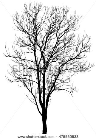 Dry Tree Dead Tree With Beautiful Branch Silhouette On White Background With Clipping Path Tree Silhouette Dry Tree Tree Painting