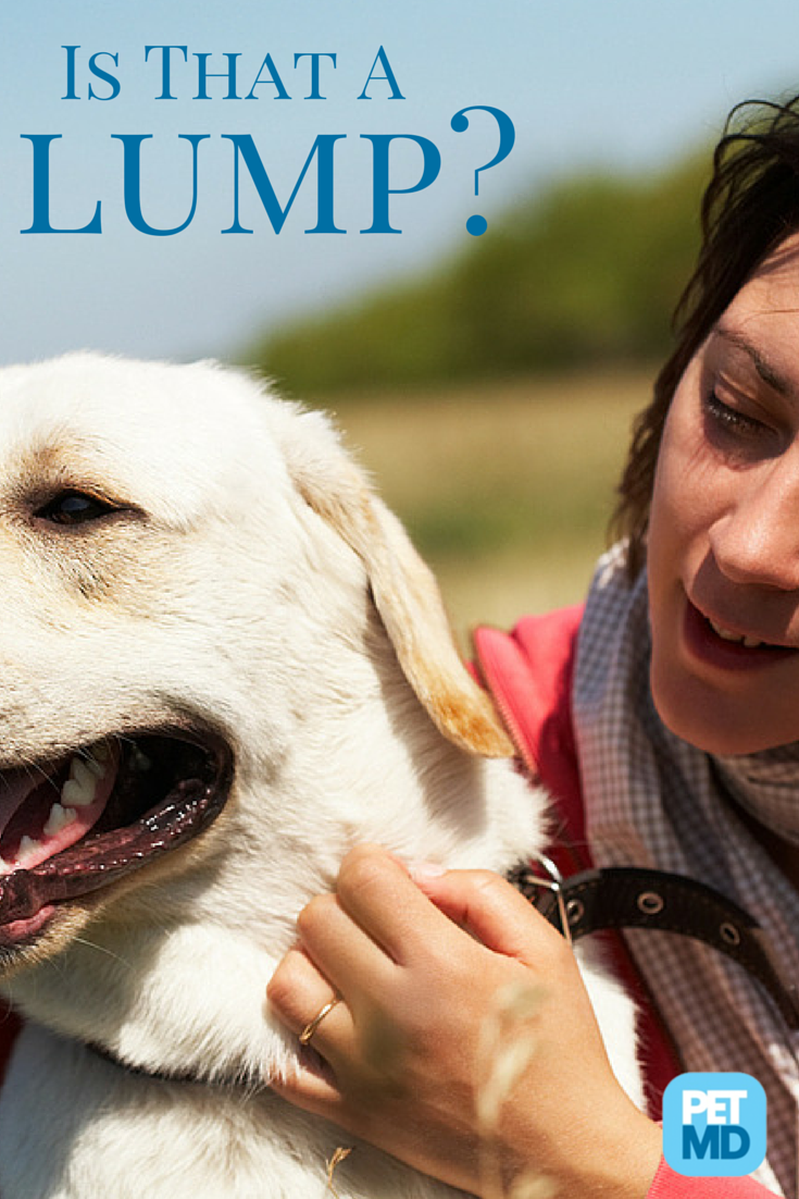 How to Handle Your Pet's Lump! Pet health, Pets, Pet dogs