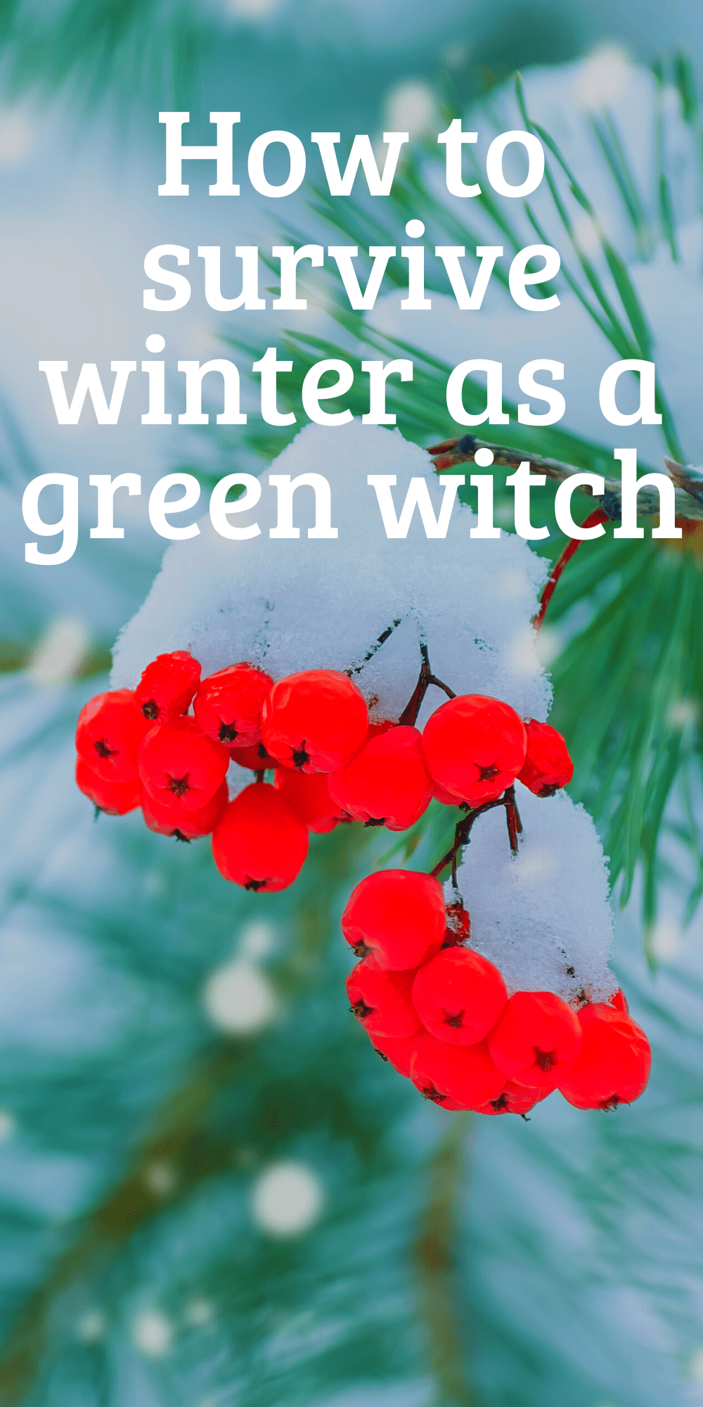 Yule Activities For Green Witches - Eclectic Witchcraft #greenwitchcraft How to survive winter as a green witch. Yule gift ideas, gardening tips for winter, green witchcraft when it's snowy outside. How to be surrounded by real plants even in the dead of winter. #yule #witch #greenwitch #witchcraft #christmas #pagan #paganism #wicca #garden #gardening #wreaths #christmastree #yuletree #poinsettia #herbaltea #greenwitchcraft