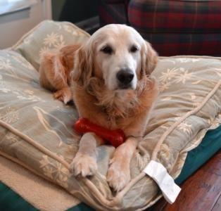 Pin On Dogs In Need Ii