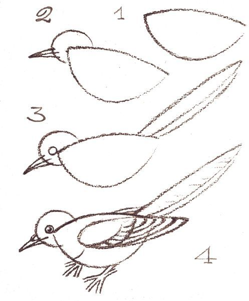 how to draw a birds nest easy step by step