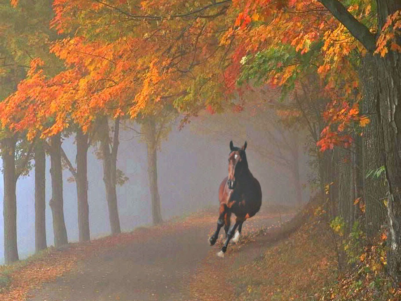 Top Wallpaper Horse Autumn - c38b95c420cf5a99c83d11e696bd282b  Best Photo Reference_69932.jpg