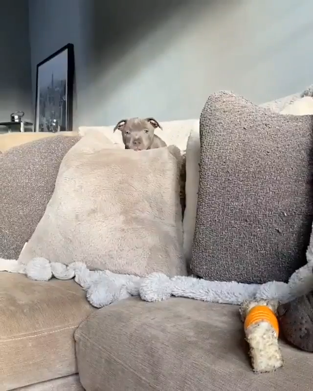 Here comes trouble... Or maybe just naps. -  #dogs #dog #puppy #puppies #funny #cute   - #2015WeddingDresses #Butterflies #comes #CuteDogs #Insects #Mammals #maybe #naps #Pets #trouble #WeddingDresses