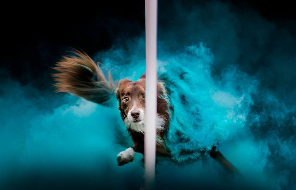 Animals Jess Bell Photography Artistic Animal Imagery In