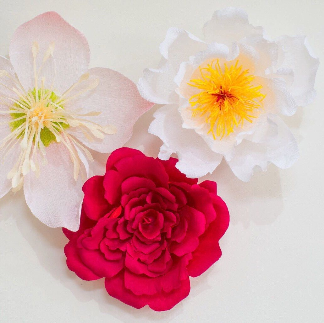 Custom large crepe paper flowers peony rose hellebore are custom large crepe paper flowers peony rose hellebore are availablethey are versatile investments for home party decor special event shop display mightylinksfo