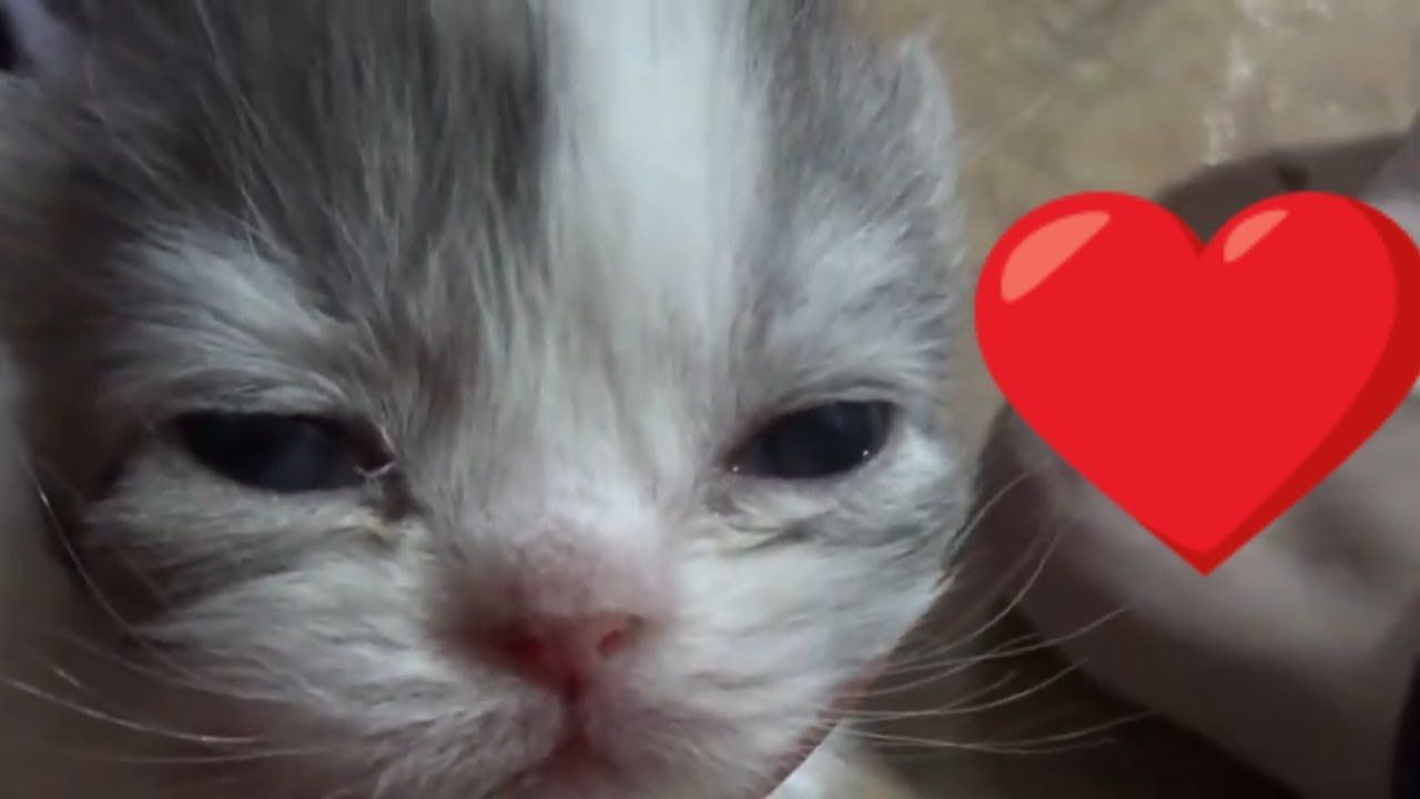 Misha S Kittens Are 2 Weeks Old What Cutie Patooties Kittens Cat Gif Cutie
