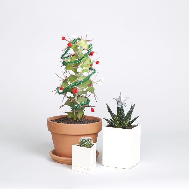 Thậm chí, bạn có thể biến chậu cây xương rồng nhỏ xinh của mình thành hình cây thông Noel cực độc.