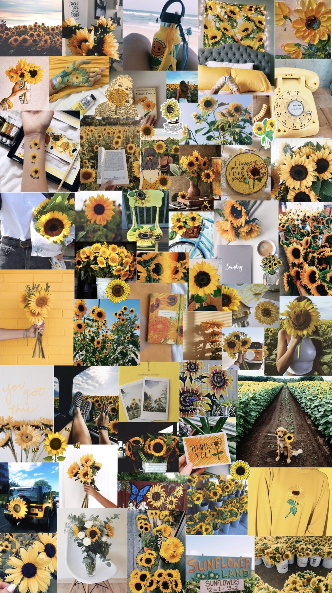 sunflowers 🌻 aesthetic background