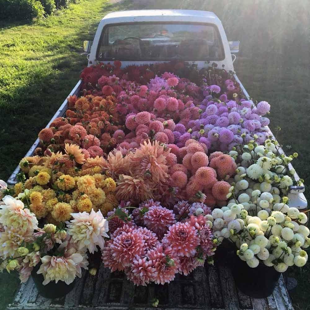 "Erin Benzakein floretflower is an early ""farmer florist"