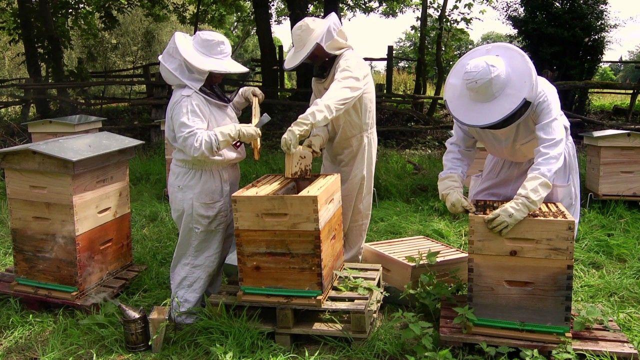 comment d buter en apiculture avec beeopic apiculture bee permaculture et agriculture. Black Bedroom Furniture Sets. Home Design Ideas