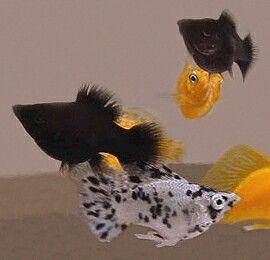 Pin En Animals Fresh Water Fish