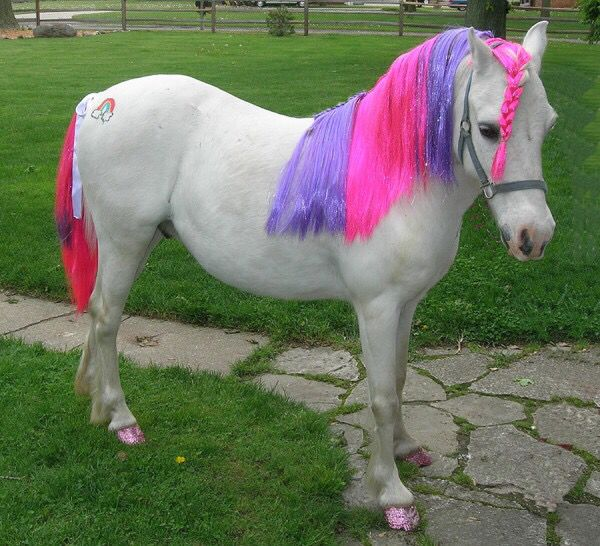 my little pony for real horses pinterest pony horse and