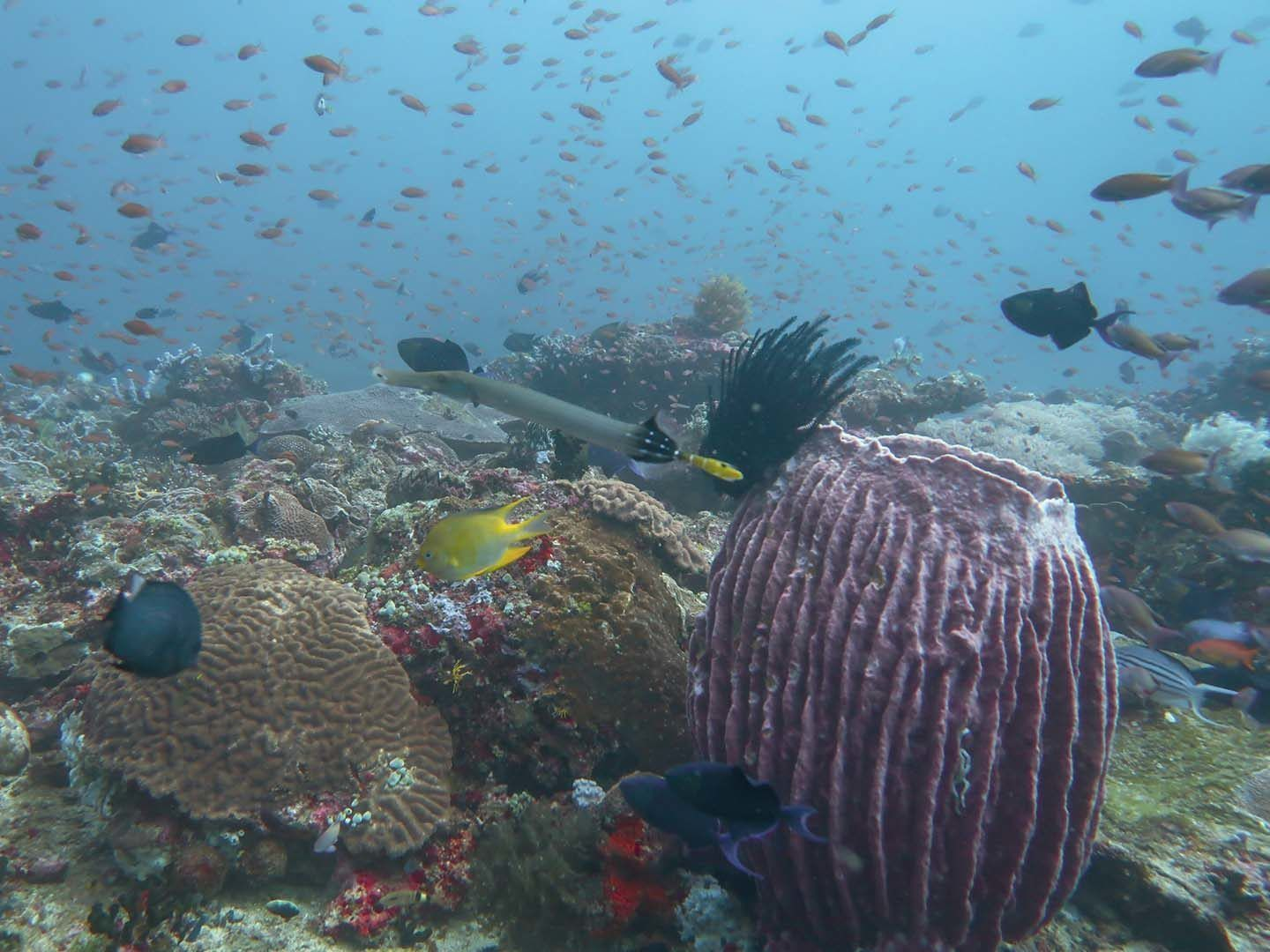 Scuba Diving Experience In Anilao Batangas Philippines Diver Bliss In 2020 Scuba Diving Best Scuba Diving Underwater Photography