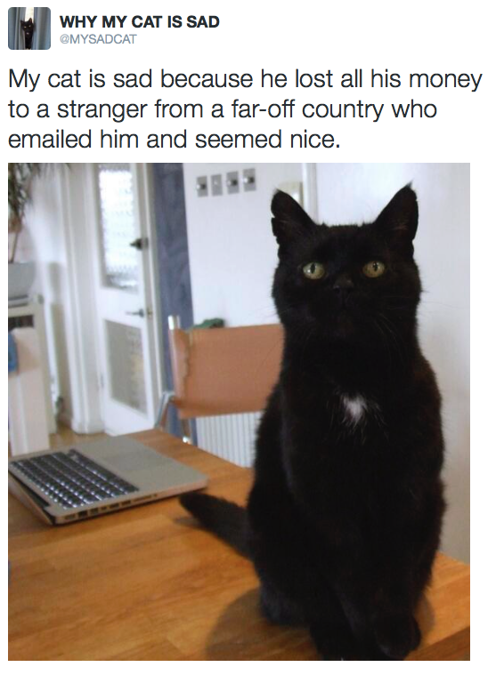 I blame the Cute black cats, Crazy cats, Cats