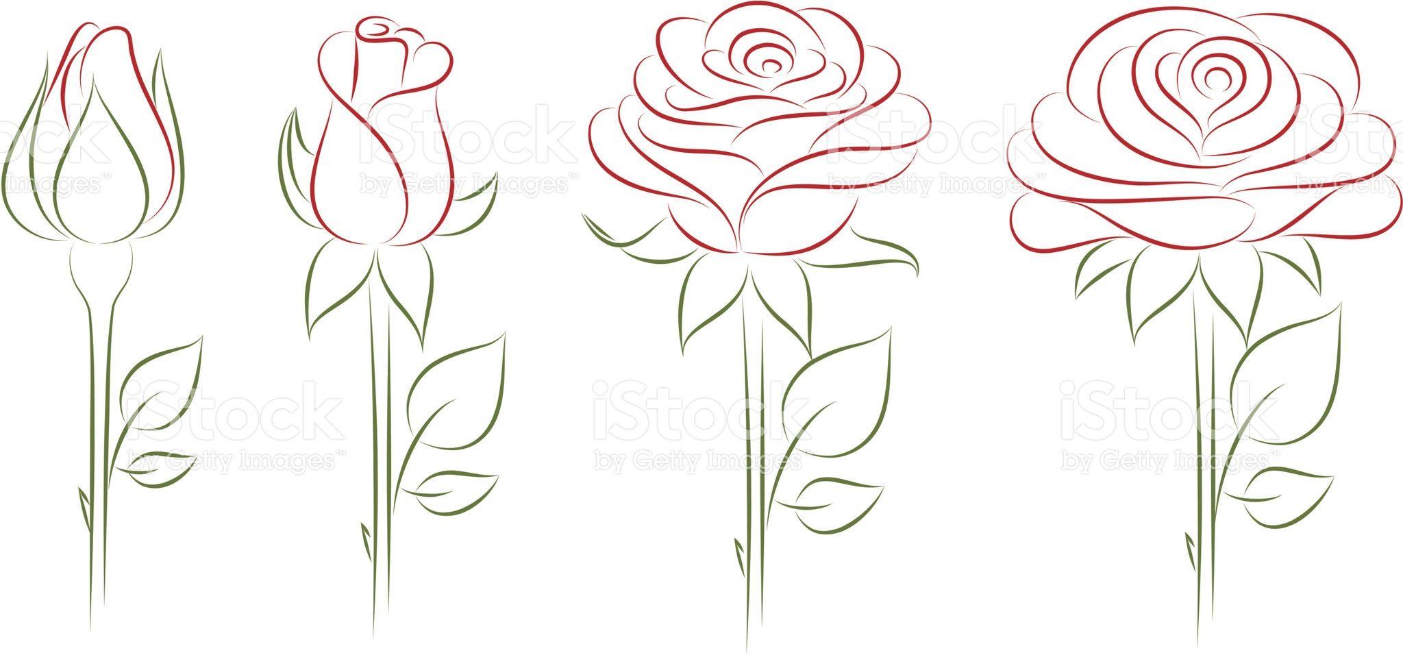 Eclosion D Une Fleur Rose Illustration Vectorielle Festes