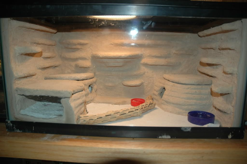 how to make simple bioactive gecko enclosure