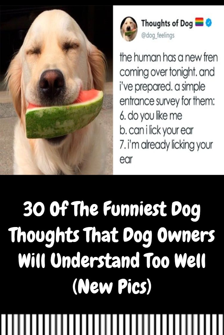 30 Of The Funniest Dog Thoughts That Dog Owners Will Understand