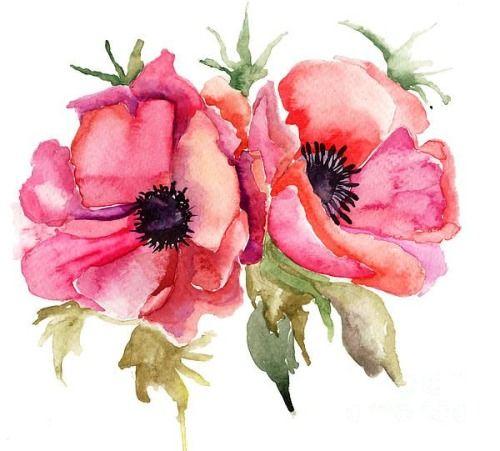 The Rose Garden Illustration Blume Aquarell Mohnblumen Und Wasserfarbenblumen