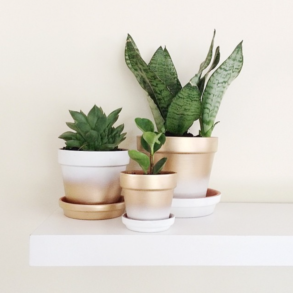 Search Results For Spray Paint Makeovers On Instagram Domino Diy Spray Paint Painted Pots Diy Plant Pot Diy
