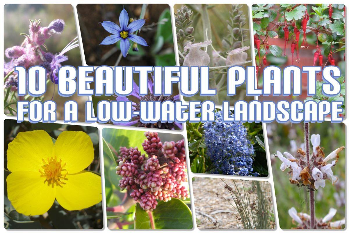 southern california plants