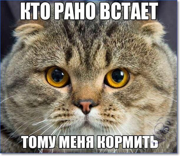 Прикольные фото котов с надписями (40 фото) | Смешные ...