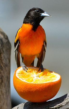 Alex Chang Blog Your Super Powered Wp Engine Blog Beautiful Birds Pet Birds Backyard Birds