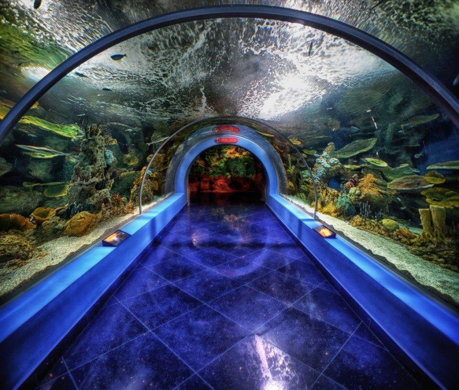 Fakieh Aquarium Jeddah Experience The Oceanic Life Without Getting Wet The Aquarium Replicates The Natural Oceanic Envir Jeddah Jeddah Saudi Arabia Aquarium