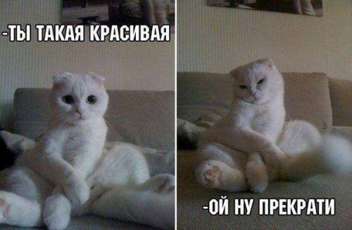 фото приколы про кошек