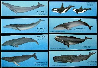 different types of whales - Khafre