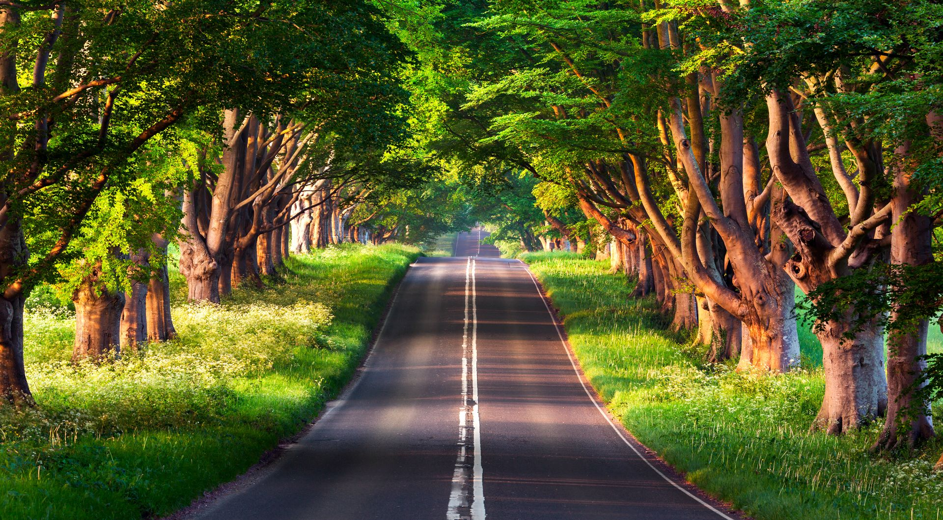 200 Srk Hd Backgrounds Download Now Background Nature Road Portrait Blur In 2020 Blur Photo Background Love Background Images Blur Background Photography