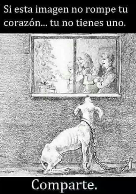 Nunca Abandones A Un Perro Solo Por Ser Viejito Dia Del Veterinario Perros Frases Perros