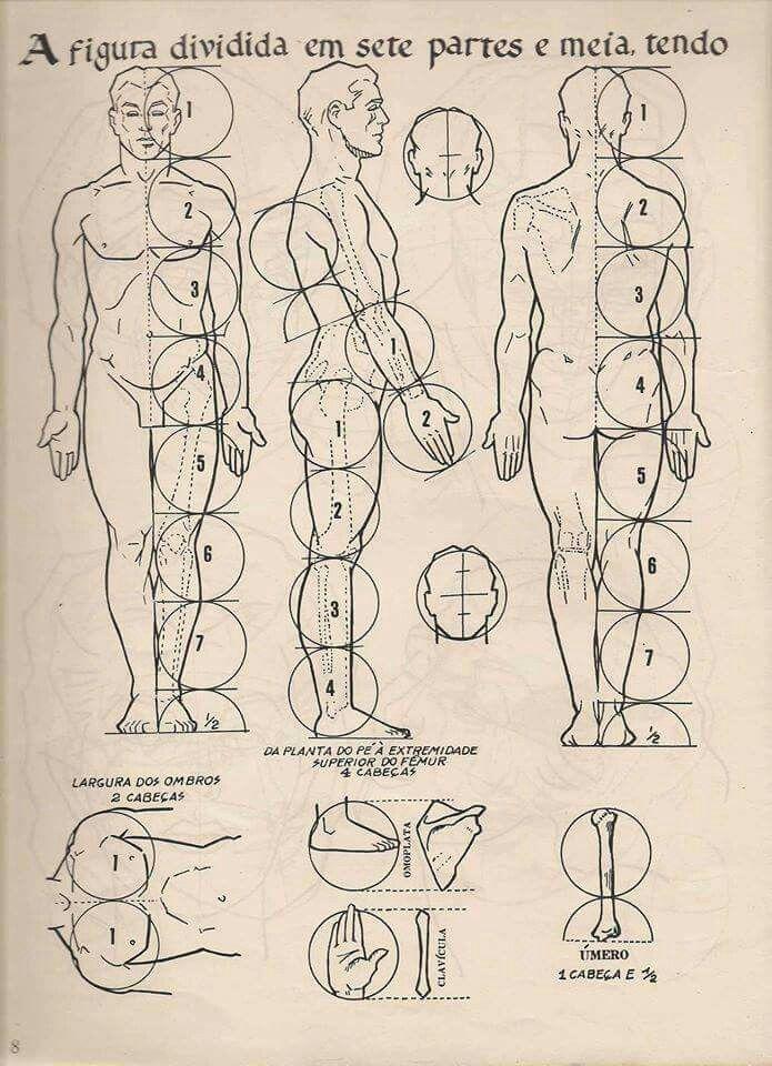 Pin de darknoise en Anatomía | Pinterest | Anatomía y Dibujo