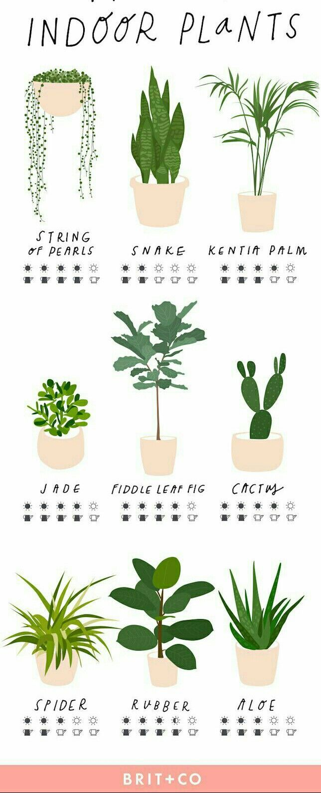 Pin by suri bomb on gardening in pinterest indoor plants