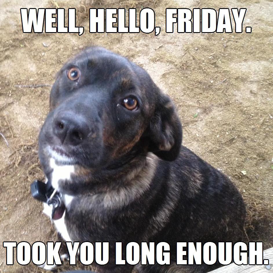 Finally Friday Took You Long Enough Meme Dog Cute Puppy Socialmedia Friday Dog Dog Memes Funny Dog Memes
