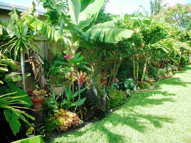 Diy Tropical Fence Border Garden 2nd Update If You Ve Been