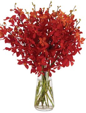 Happy Holidays Orchids: This holiday season, we are offering exceedingly popular, lavish sprays of ruby red mokara orchids. Their fluttery, red petals are enough to spread the season's cheer everywhere they go. A bouquet of hearty stems (choose 12 or 24) laden with blossoms arrange themselves effortlessly, standing very merry and tall inside our teardrop-shaped glass vase. http://bit.ly/1fSJWqE