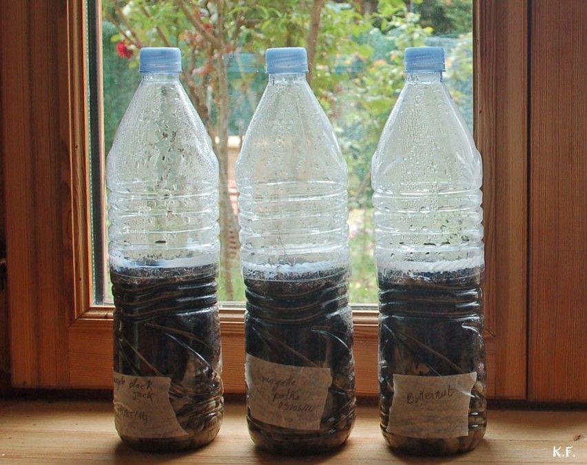 semis en bouteille plastique bricolage noel semis en. Black Bedroom Furniture Sets. Home Design Ideas