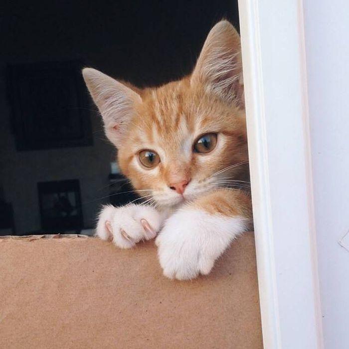 chaussette patte de chat taché roux