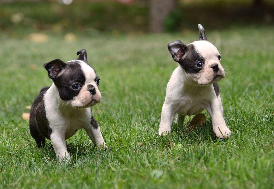 Sunday Puppy Games
