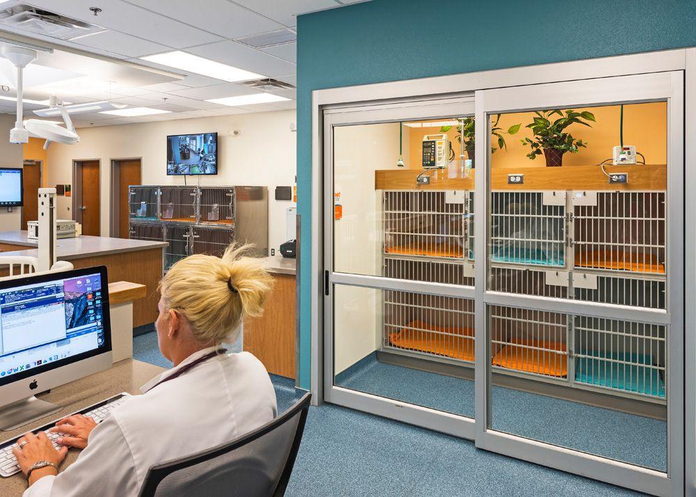 Feline ward Hospital Design Building a Vet Practice