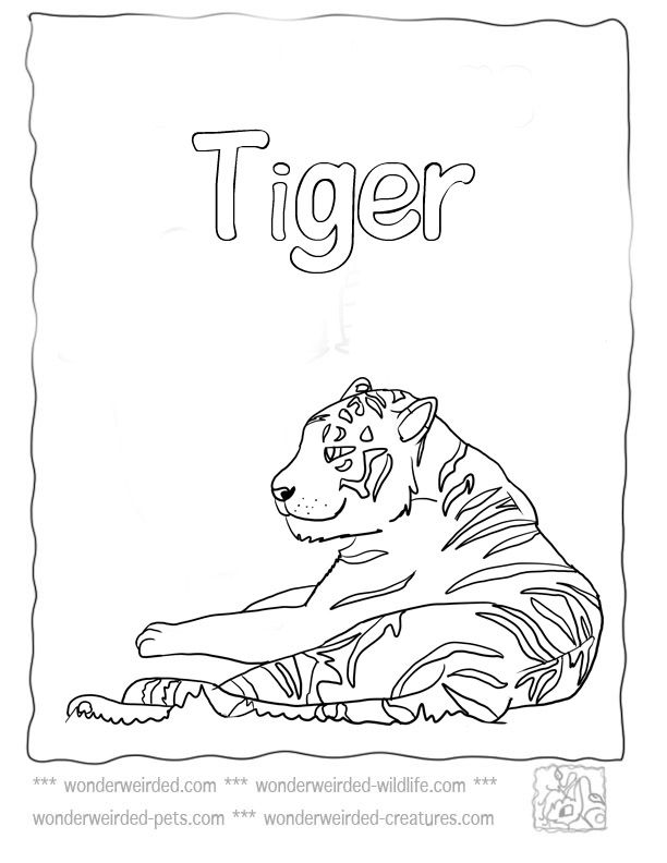 Tiger Coloring Pages At Www Wonderweirded Wildlife Com Tiger