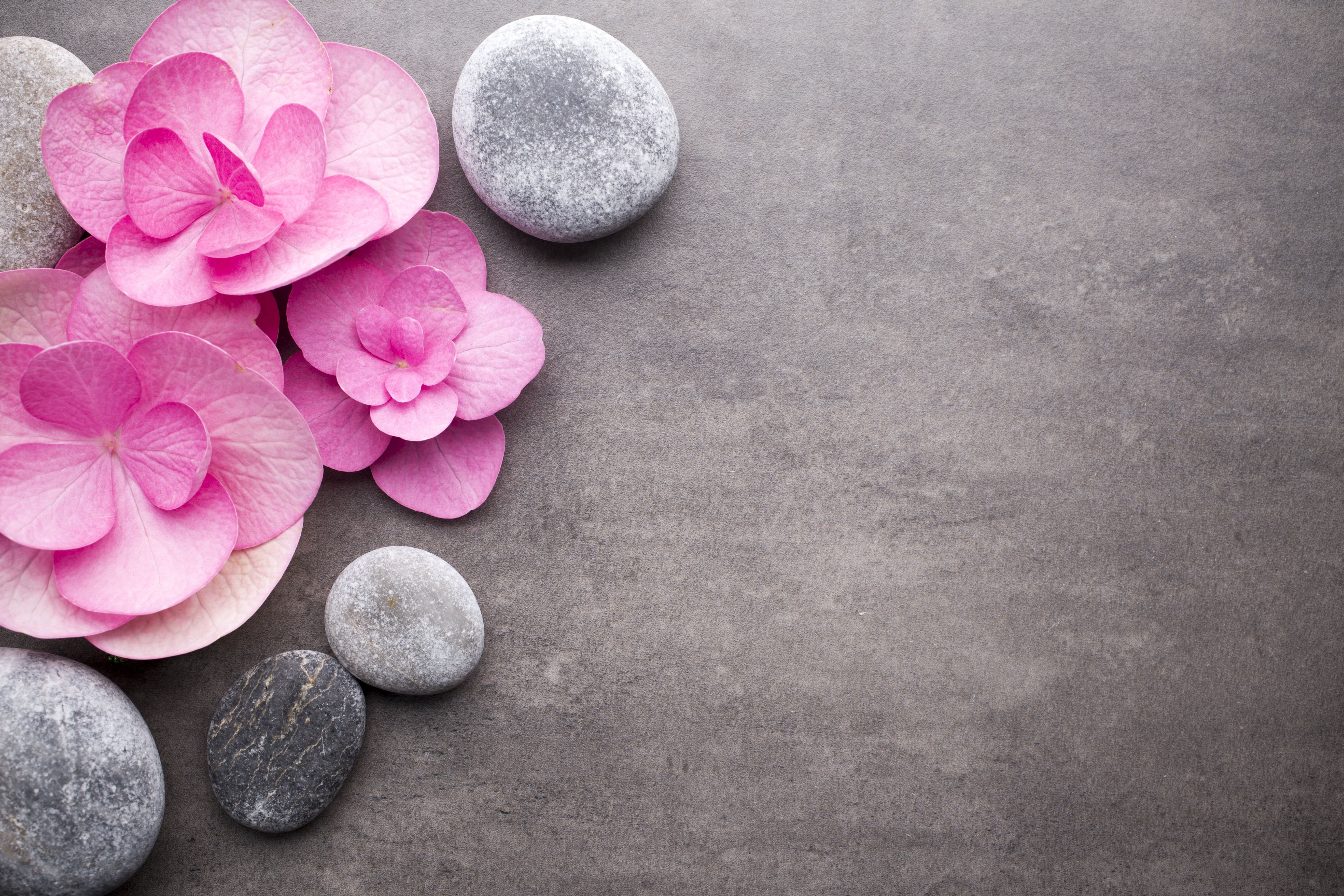 Flowers Stones Pink Pink Flowers Stones Spa Zen 5k Wallpaper Hdwallpaper Desktop Pink Wallpaper Pc Zen Background Spa Images