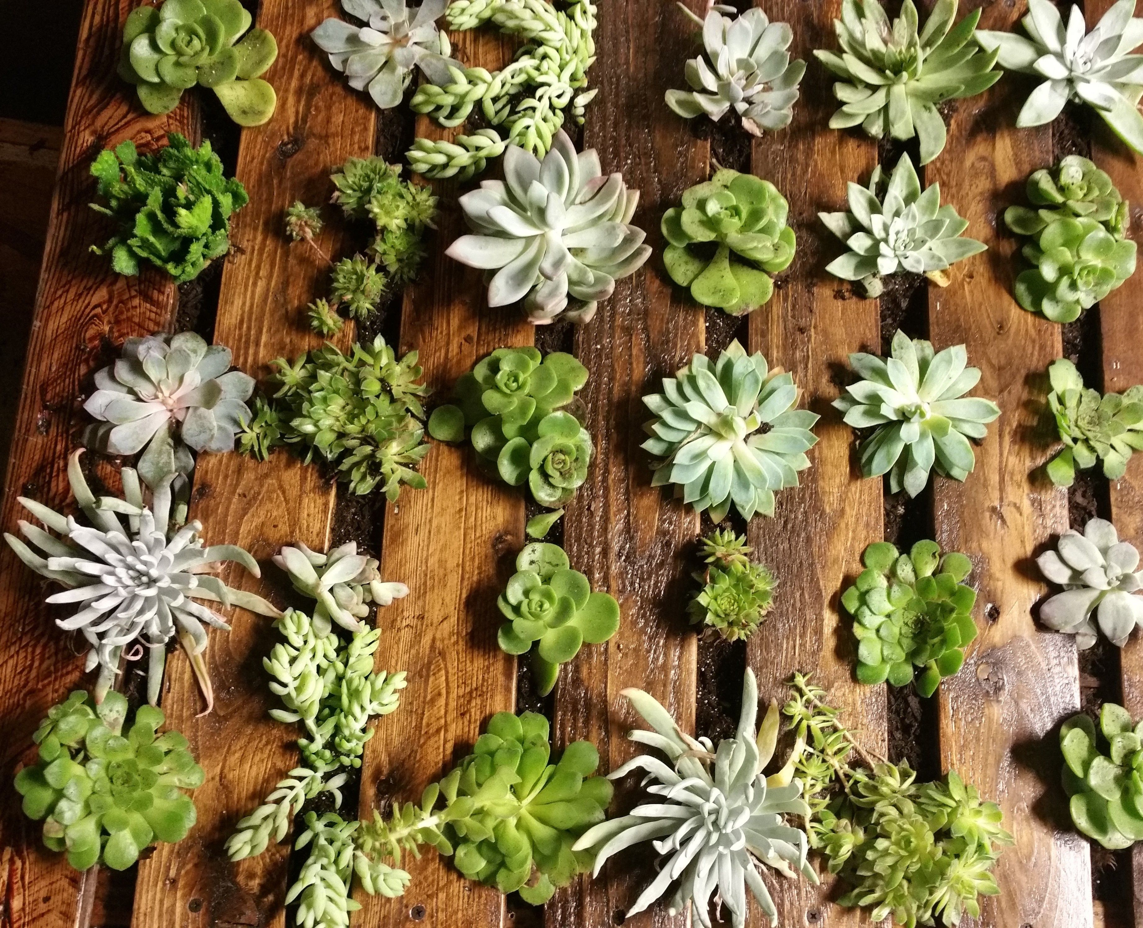 Our Stunning Succulent Shadowbox is almost complete...beautiful, no? Yes!...