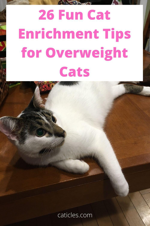 c395a04ca10a9477a16f084ff2349cd7 - How To Get My House Cat To Lose Weight