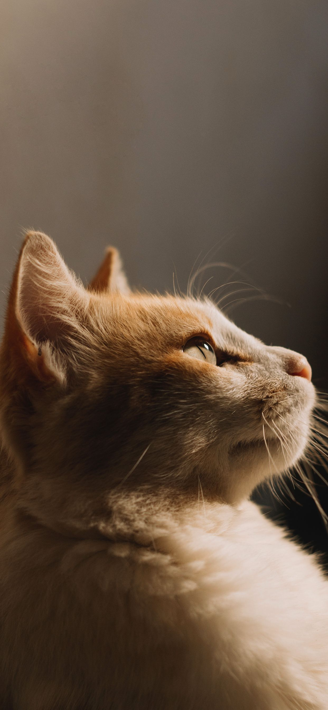 8 Cute Cat iPhone Wallpapers Cats iphone, Cute cat